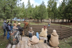 horse handling training in the round pen is an essential part of our training