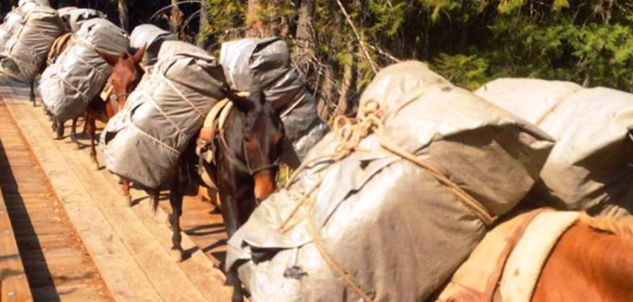 Horse and Mule Packing School